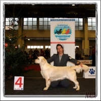 European Dog Show Brusselas (Bélgica) 2015
